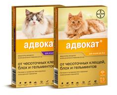 Дегельминтизация котам