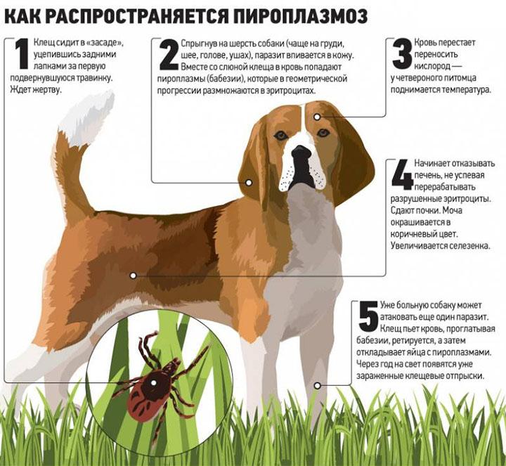 Анализ крови после укуса клеща у собаки Справка 070 у Кунцевская