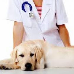 стеризация собак